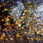 leaves in puddle 1 by paul edmondson