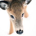 Doe A Deer by Karol Livote