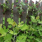 Honeysuckle Fence by Margie Avellino