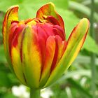 Tulip fun by Maria1606