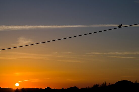 Sunset with spectator on the wire by jazz4ev