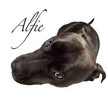 Alfie by Mark Cooper