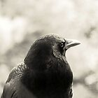 CROW by Doria Fochi