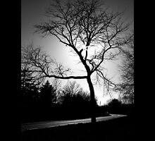 Tree On Halsey Lane - Water Mill, New York  by © Sophie W. Smith