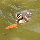 Baby Duck by rosaliemcm