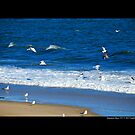 Seagulls Flying Above Atlantic Ocean - Hampton Bays, New York by  Sophie Smith