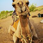 Camel by Natasha Davies-Walke