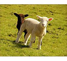 Woolly Love Photographic Print