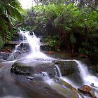 Leura Falls by Dean Symons