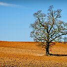 Lonely Tree by Ralph Goldsmith