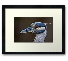 Yellow Crowned Night Heron Portrait Framed Print