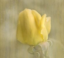 My Yellow Dream... by Qnita