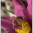 It's Bee Time (I've uploaded this 4 x and can't get it situated right) by Betsy  Seeton