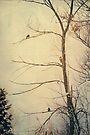 Three in a Tree by KBritt