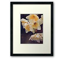 Dusky Yellows Framed Print