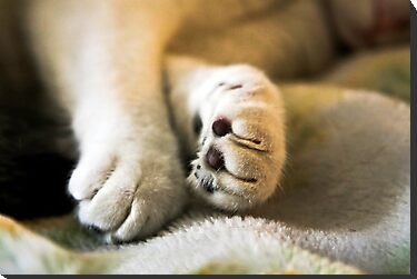 Sophia's Peaceful Paws by heatherfriedman