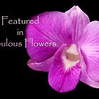 banner for Fabulous Flowers by lensbaby