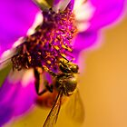 Collecting Pollens by Aurobindo Saha