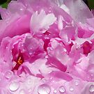 Pink Peony with Rain Drops by BluedarkArt