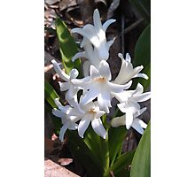 Pure White Spring Photographic Print