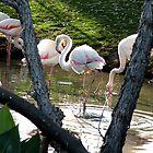 Flamingo by SisterSunshine