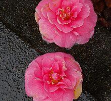 sidewalk lotus 2 by dedmanshootn