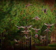 Turkeys. by Ginger  Barritt