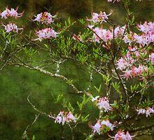 Ann's Spring by Ginger  Barritt