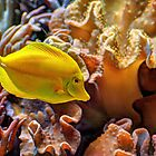 Yellow Fish by venny