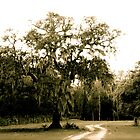Live Oak and Spanish moss by MEParnell