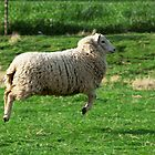 Leaping Sheep by Mark Van Scyoc