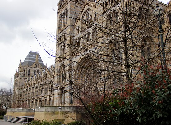 Natural History Museum by magiceye