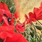 """Poppies by Antonello Incagnone """"incant"""""""