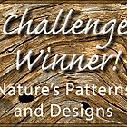NPAD Challenge Winner Banner by Celeste Mookherjee