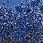 Tree in the Blues by Nira Dabush