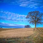 Autumn Landscape Berkshire by mlphoto