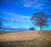 Autumn Landscape Berkshire by mlphoto