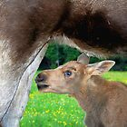 Baby Moose - Searching for Milk by Jo Nijenhuis