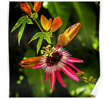 Little Red Bromeliad Poster