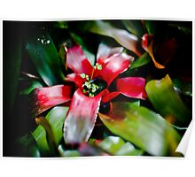 Red Bromeliad with Symbiote Poster