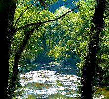 Through the trees by Jordan Green