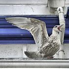 The Eastbourne Gull by Larry Davis