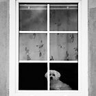 Dog on window shelf by Wildcat123