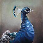 Peacock by Elizabeth J. Nixon