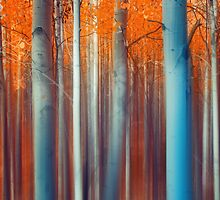 Lines Of Autumn by John  De Bord Photography