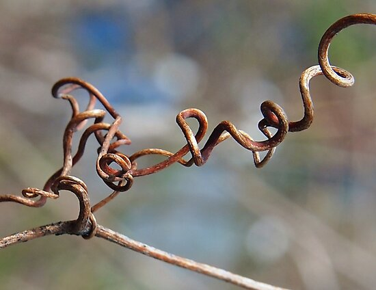 Twisted Tendril by Linda  Makiej