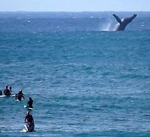 Whale Watching at Waimea by kevin smith  skystudiohawaii