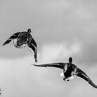 Flight of fancy by Jonathon Speed