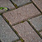 Patio Bricks by JMG1883