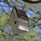 Bird House by JMG1883